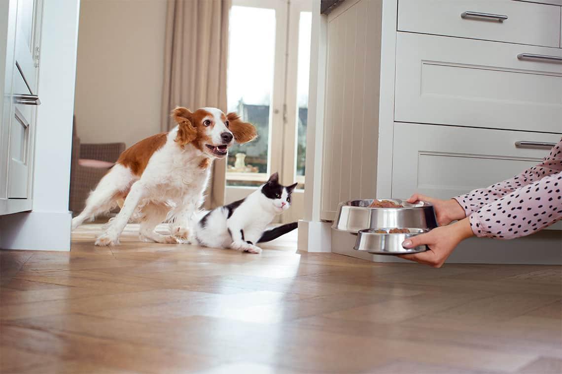 feeding a dog and a cat